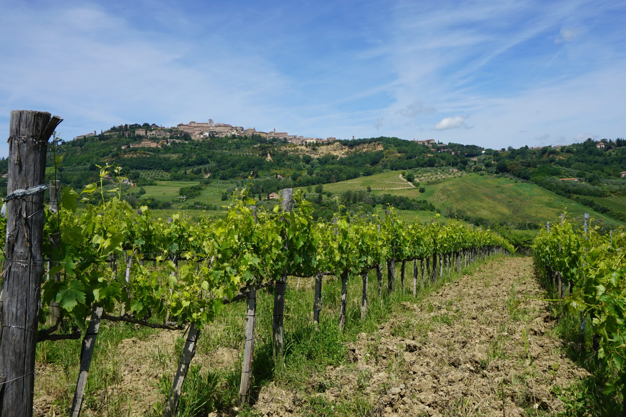 winery, tuscany, italy