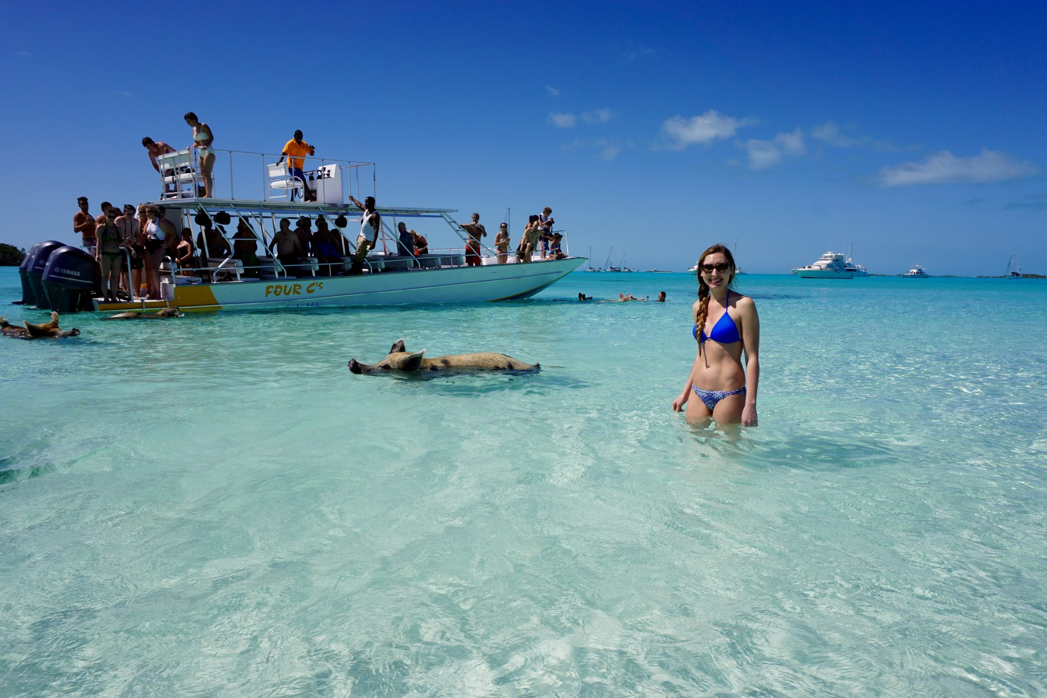 exuma, bahamas, swimming pigs, big major cay