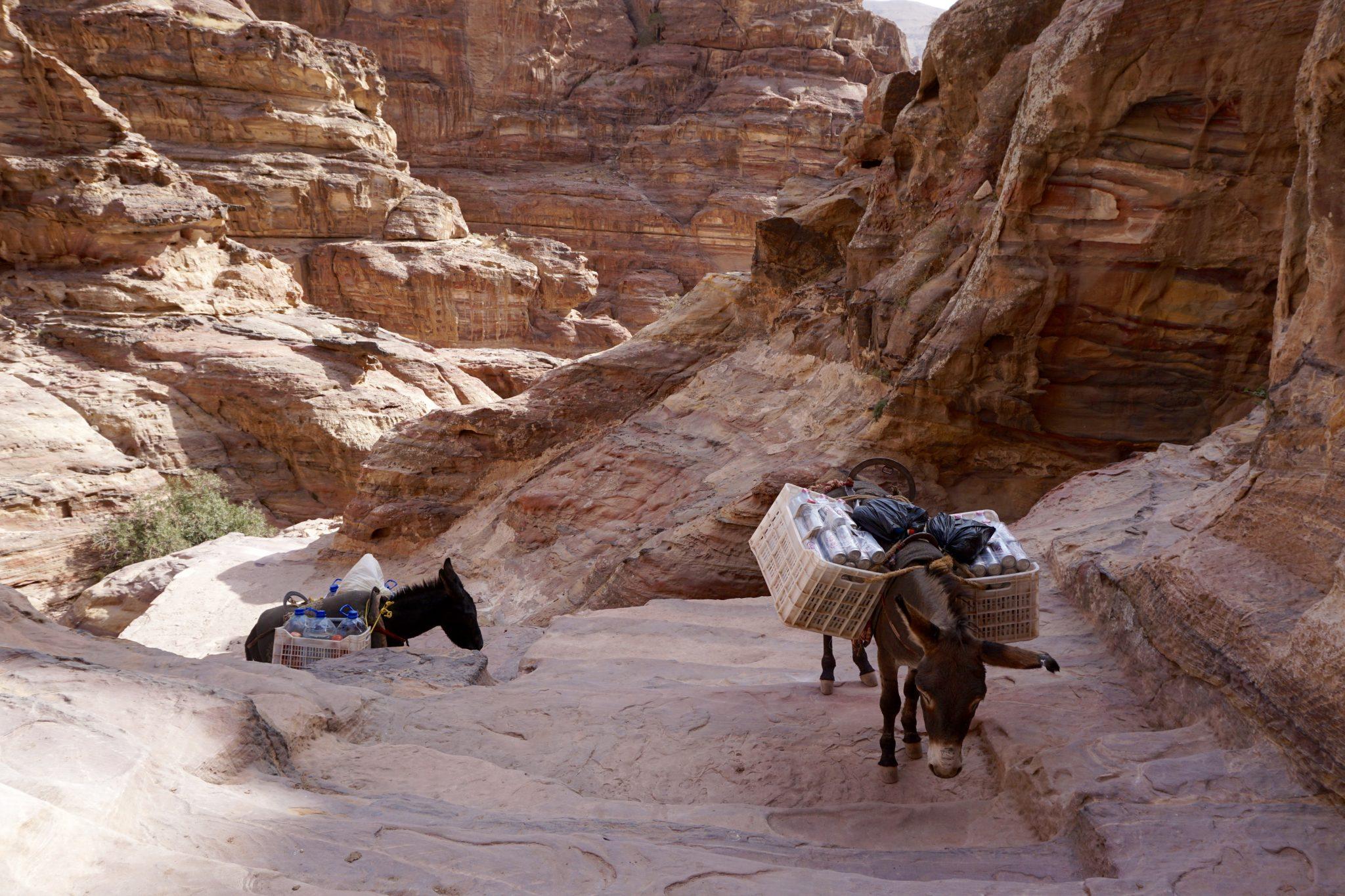 hike to monastery, petra, jordan