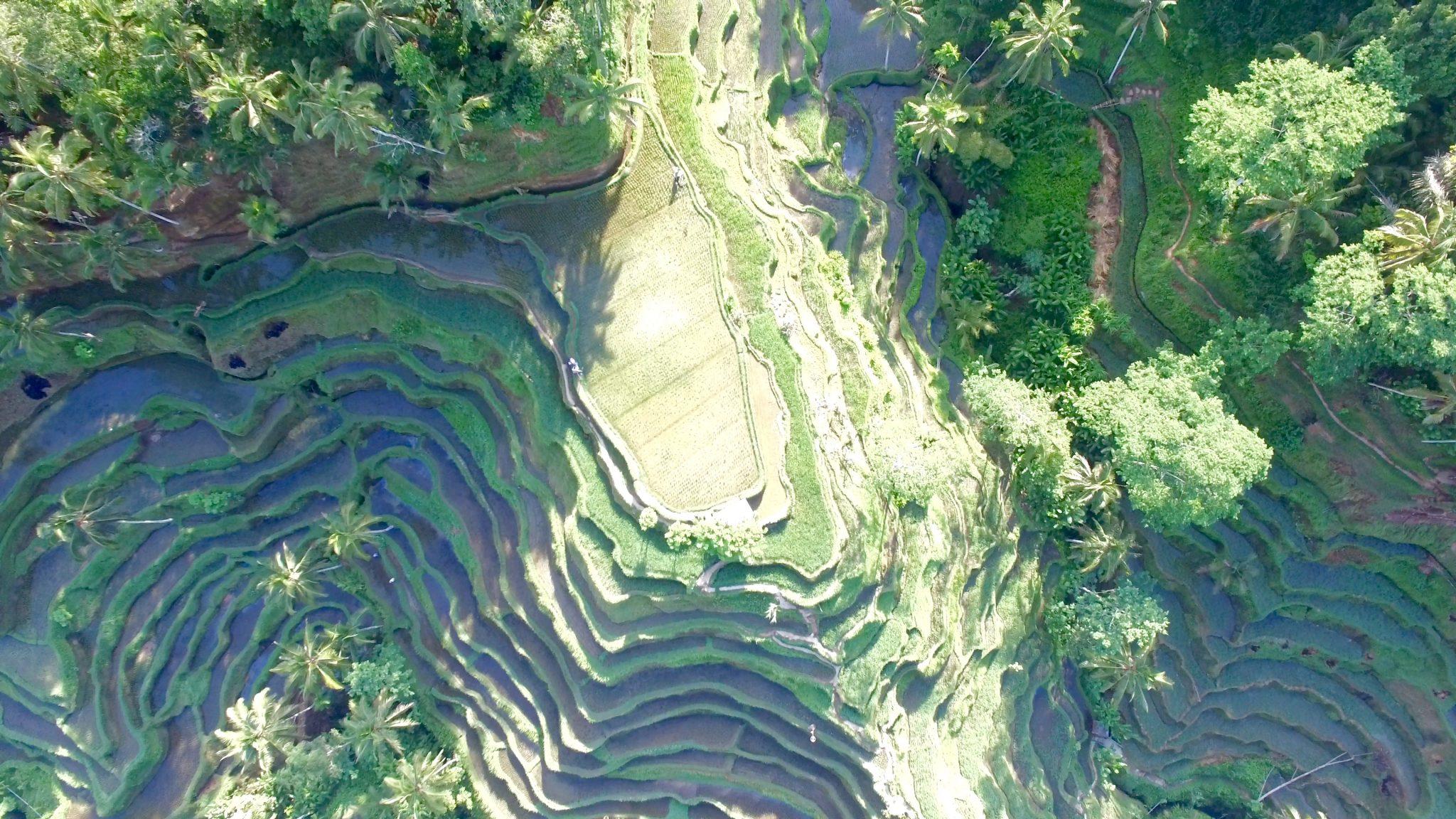 tegalalang, rice terrace, bali, ubud, drone shot, aerial view