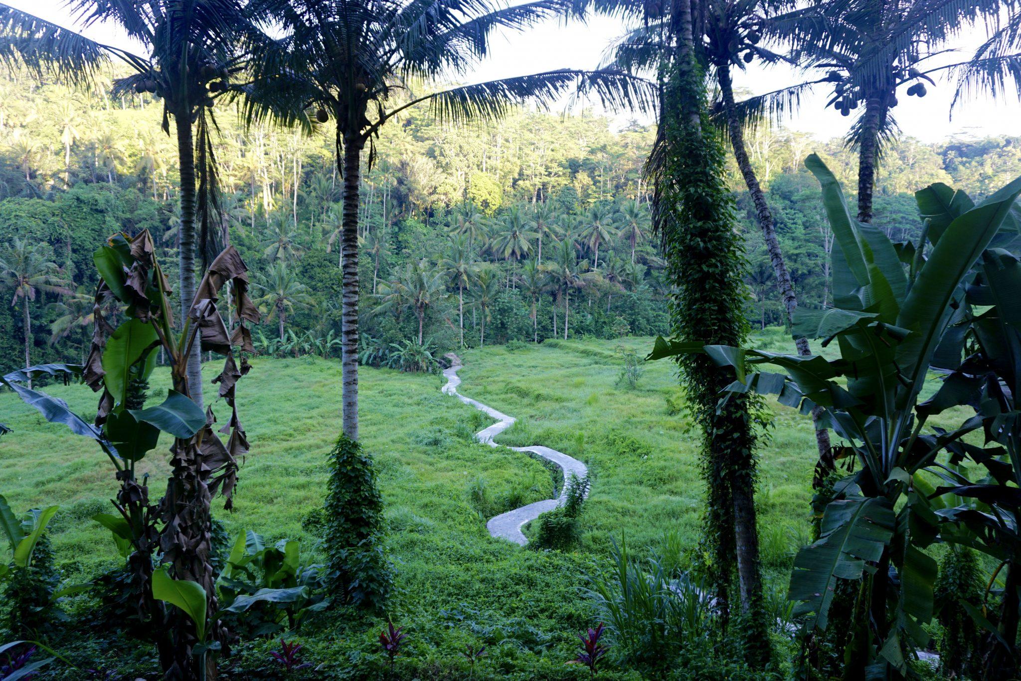 rice terraces, ubud, bali, black penny