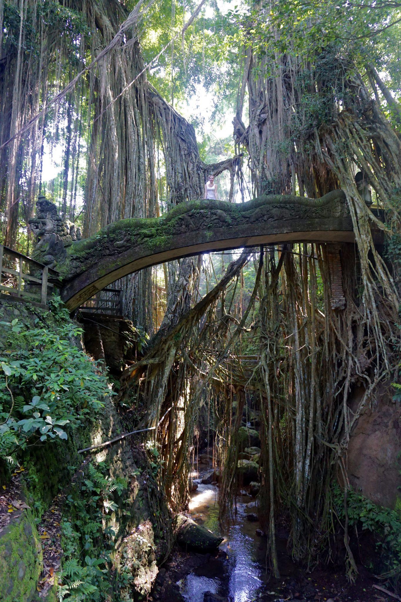 ubud, monkey forest, jungle, bali