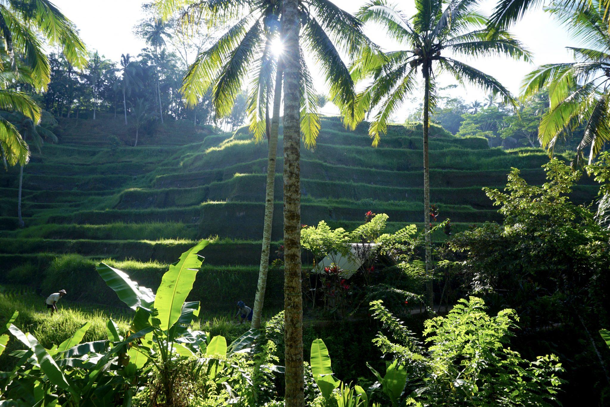 tegalalang, ubud, bali, rice terrace