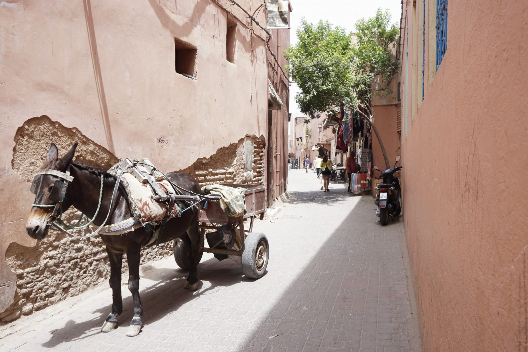donkey, cart, marrakech, street
