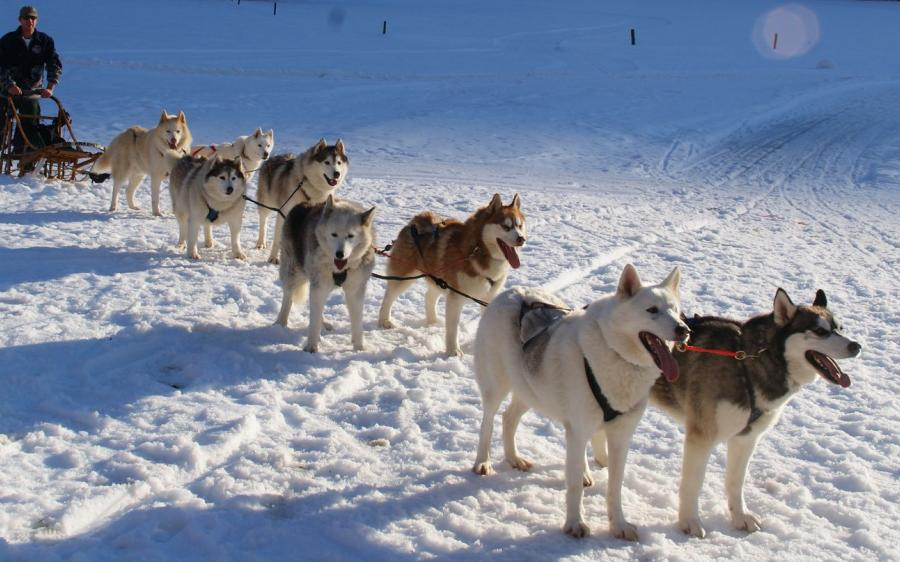 dogsledding near Hallstatt in winter, Austria