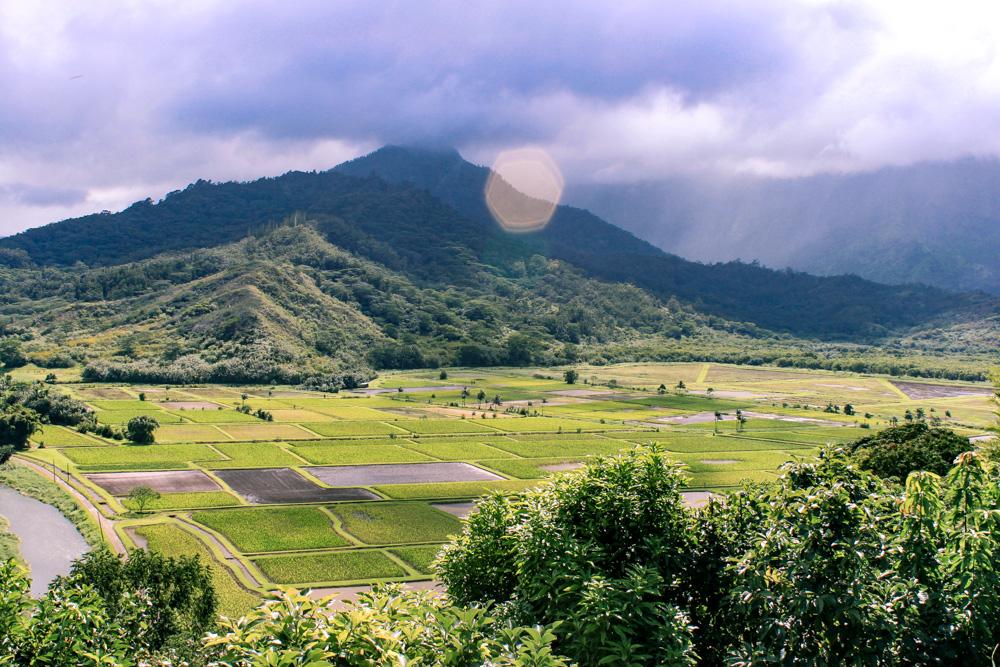 kauai farms, hawaii