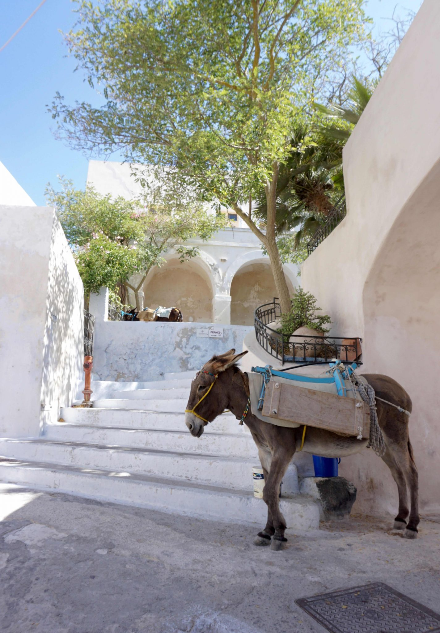 Donkey in traditional town of Pyrgos, Santorini