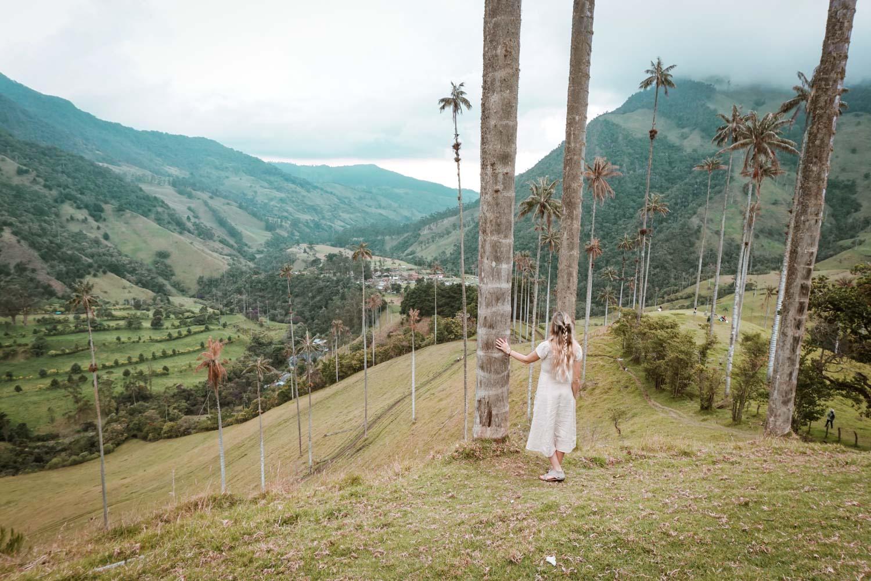 cocora valley salento colombia