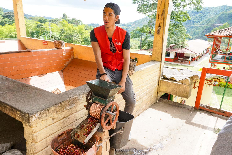 Ocaso coffee tour salento colombia