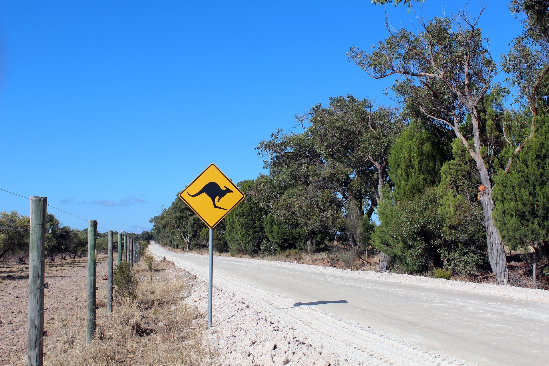 Kangaroo Road sign australia great ocean road drive