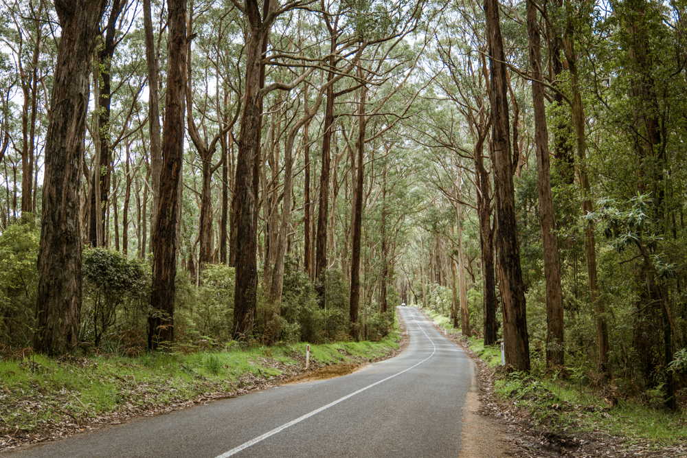 great ocean road 2 day itinerary cape otway