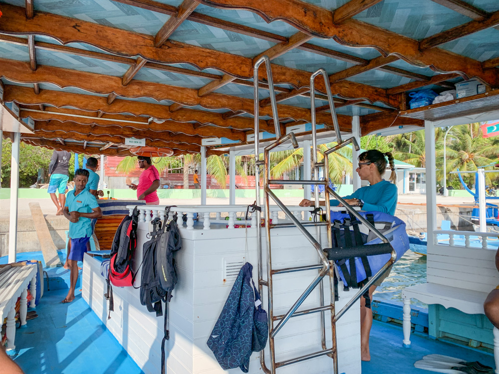 Whale shark excursions Dhigurah