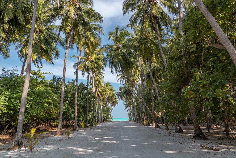 Fulhadhoo palm tree road